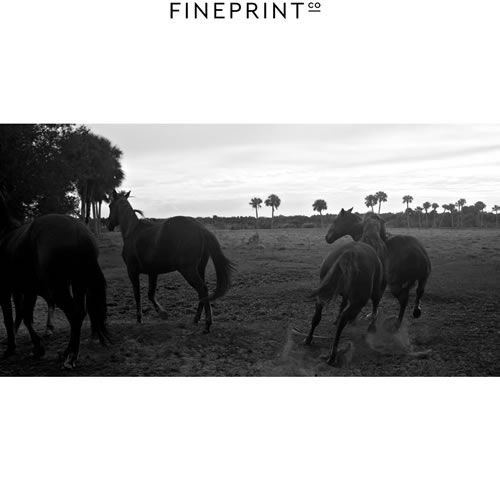$100 Voucher towards a Horse Print