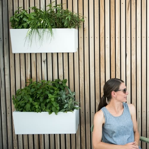 Self Watering Mini Wall Planter By Glowpear